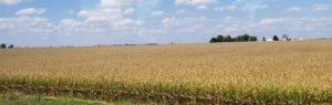 車窓から見える大穀倉地帯(シカゴ~オマハ)